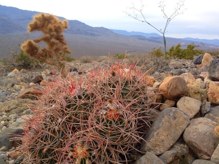 Cactus in the California desert.