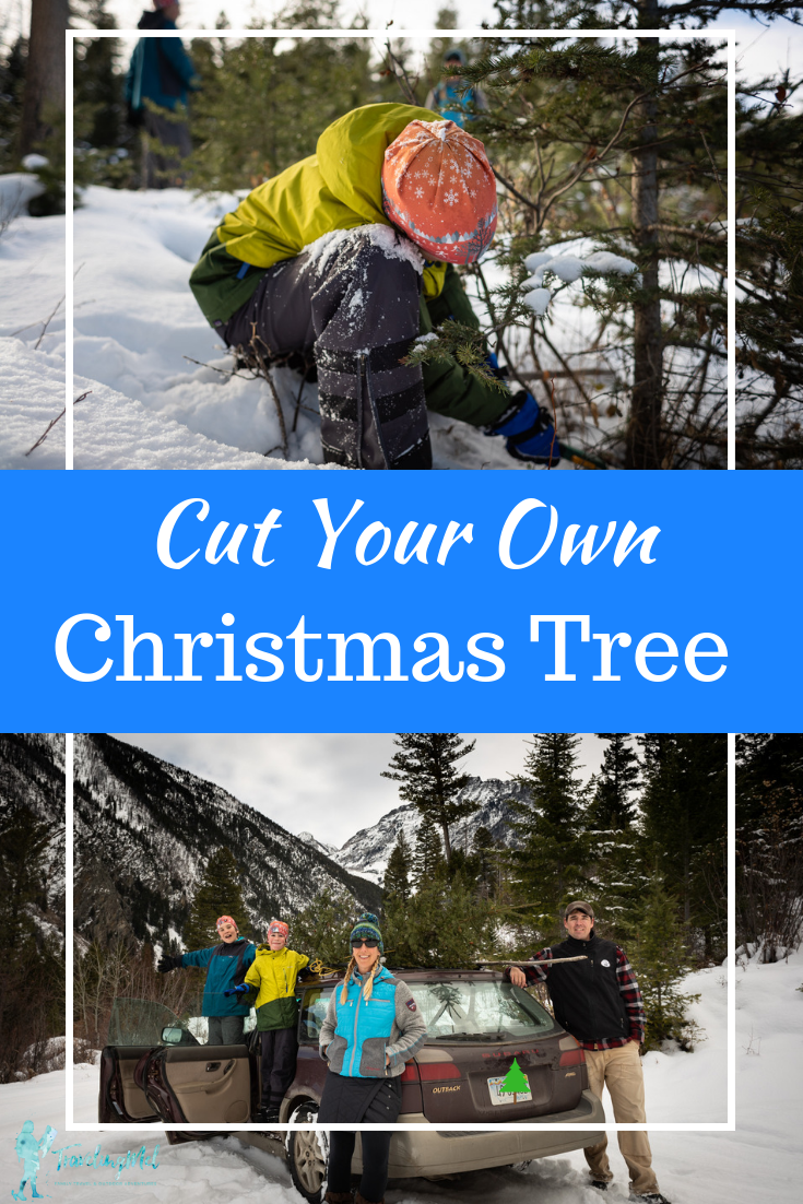 How do you cut down a real Christmas tree from the forest? Come with us and we will show you how to: get a permit, cut the tree, and take care of it.