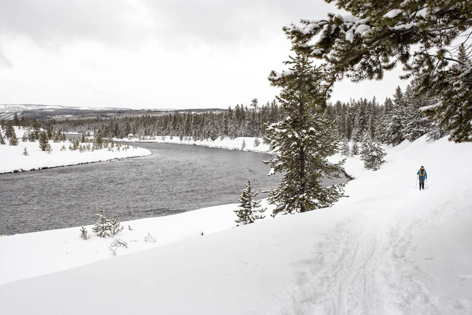 Skier along the Madison River in Yellowstone