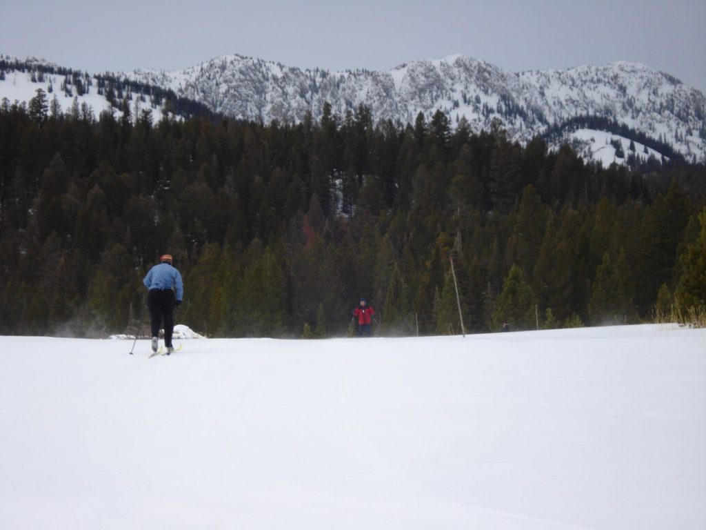 cross country skier with trees and mountain in back