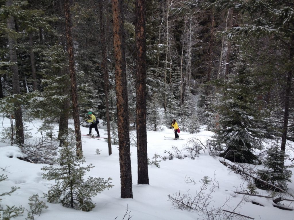 cross country skiers in the trees at Homestake Lodge near Butte, Montana