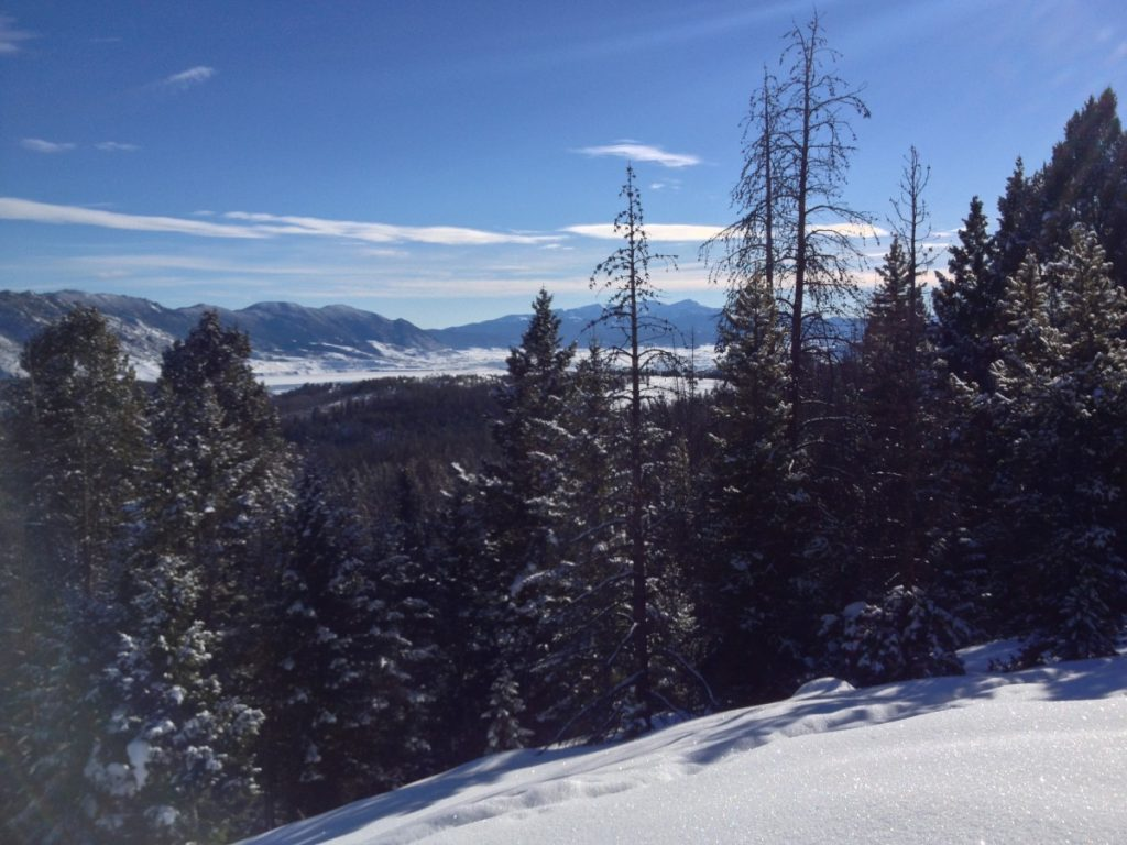 view of treetops and mountains in the distance