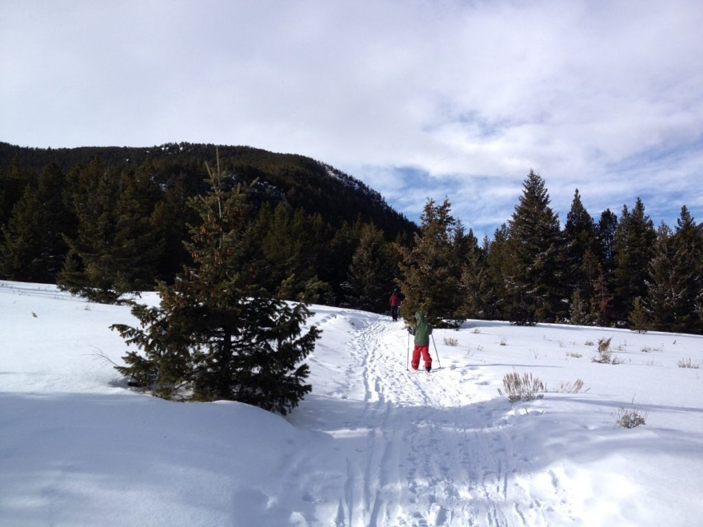 Nordic skier on the trails at Silver Run Cross Country Ski Trails near Red Lodge Montana