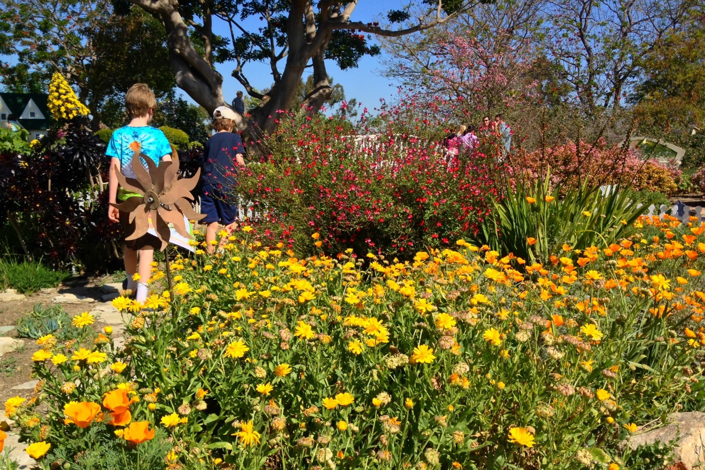 Anders And Finn Walk Past Blooming Flowers At The South Coast Botanic Garden  On The Palos