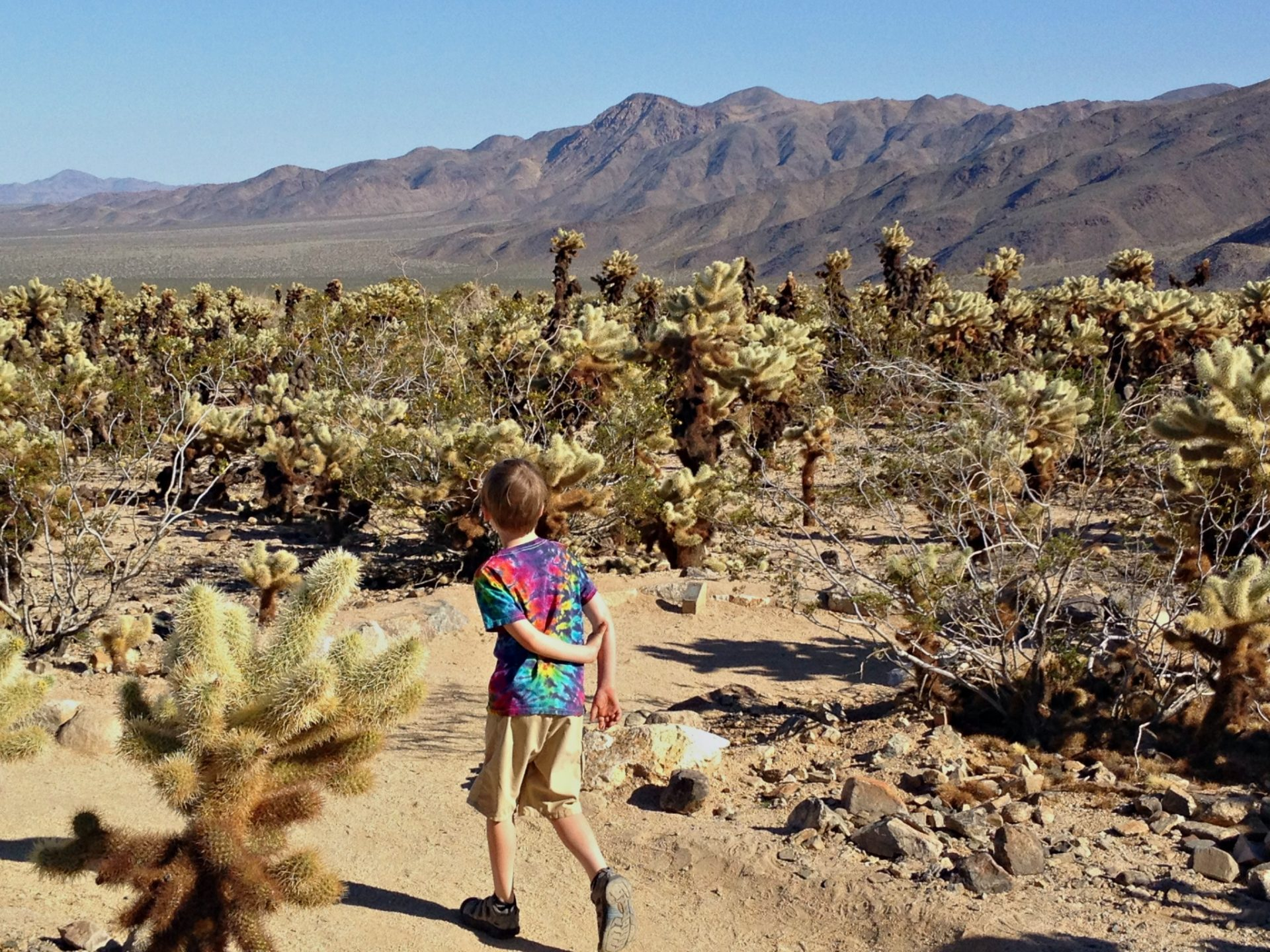 Cholla Cactus Garden hike is part of a fun vacations for kids