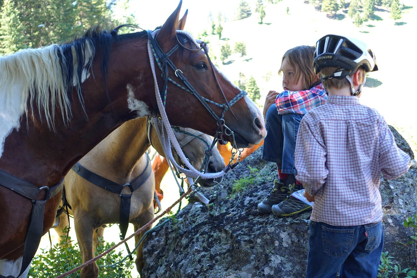 Horseback riding in Yellowstone National Park with Wilderness Pack Trips horse eats boy's lunch