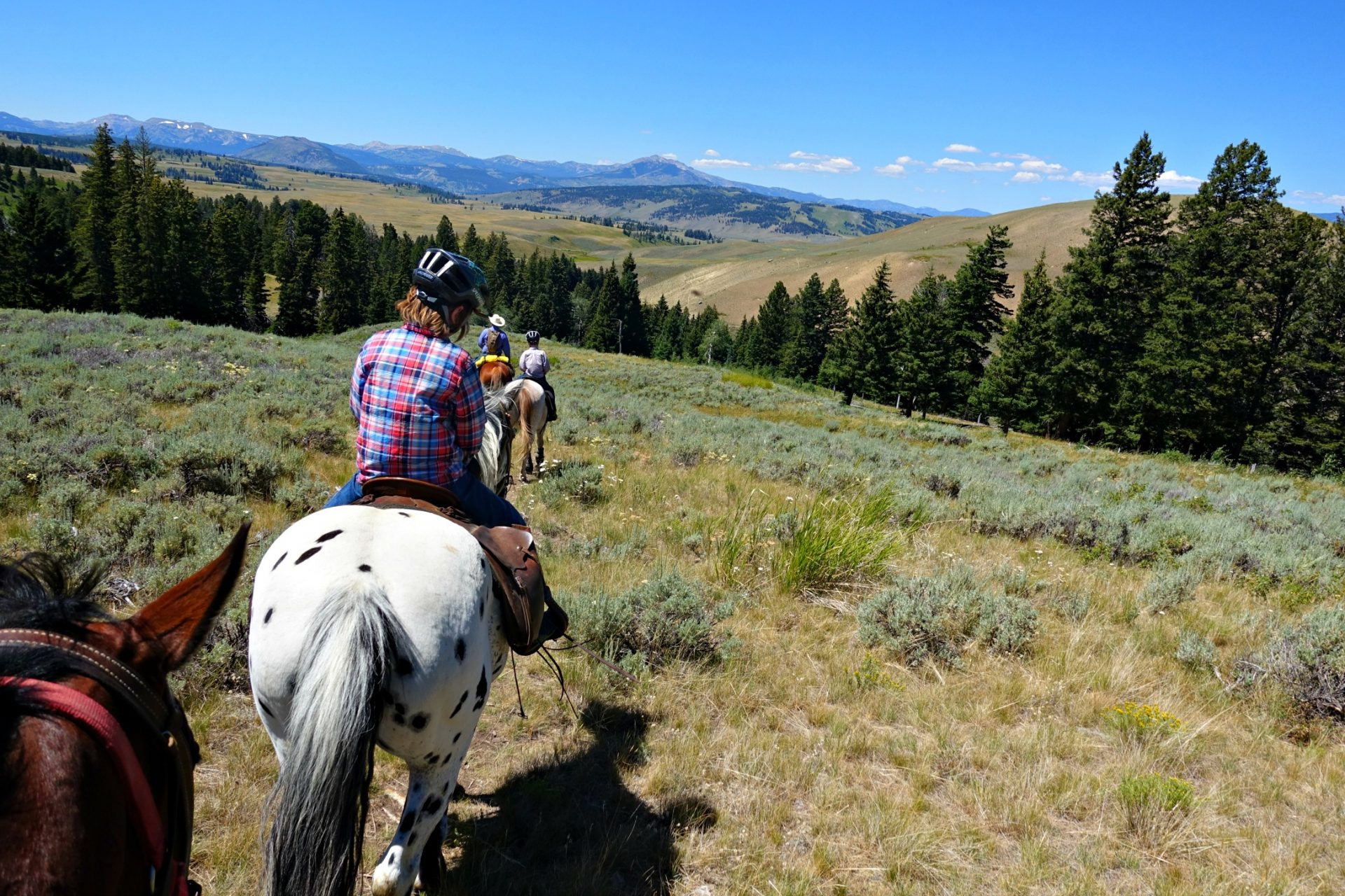 Horseback riding in Yellowstone National Park with Wilderness Pack Trips Gallatin Mountains