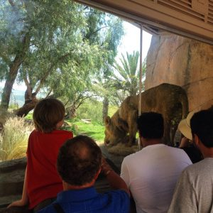 Watching a lion through a glass window while visiting the safari park
