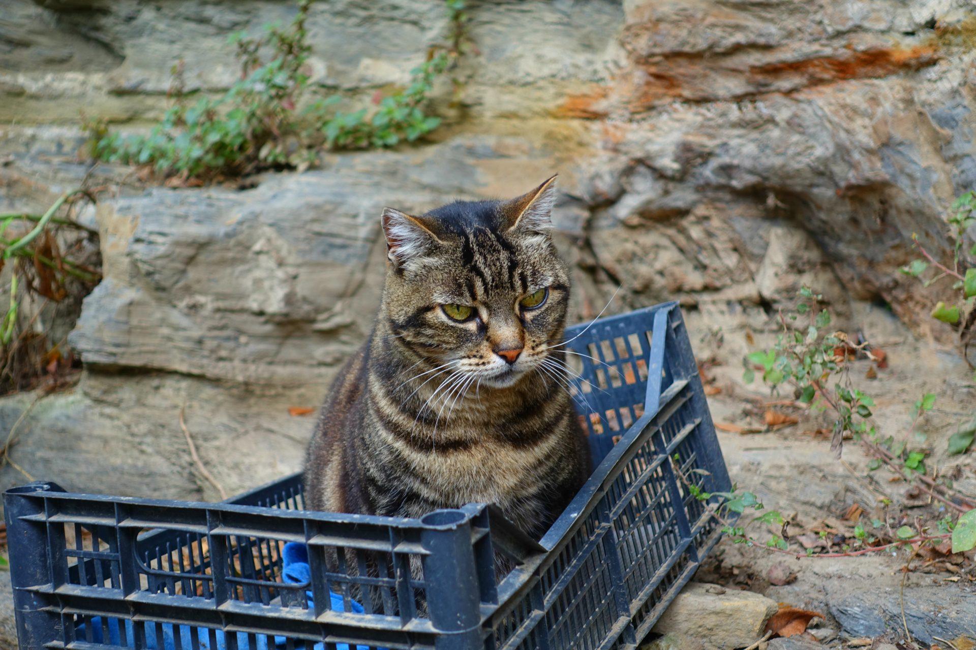 feral cat sanctuary cinque terre trail