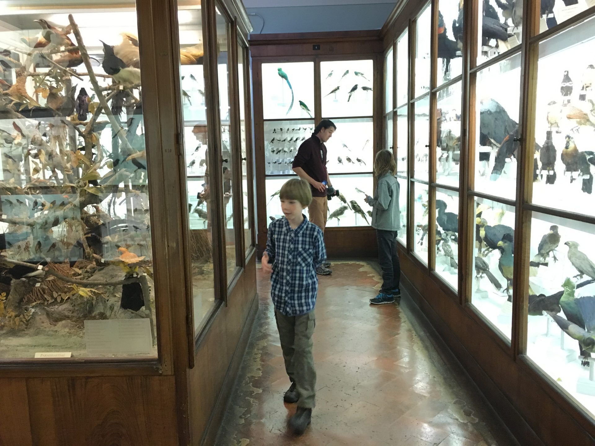 Things to do with kids in Florence Italy include la specola