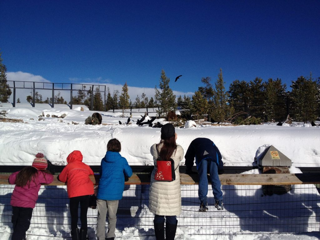 Kids N' Snow at the Grizzly and Wolf Discovery Center feeding the bears