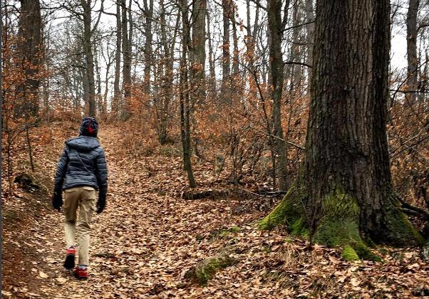 Hiking trails in Tivoli Park Ljubljana