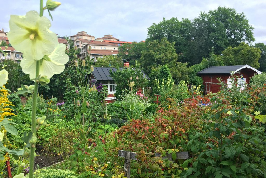Tanto Norra allotments in Stockholm