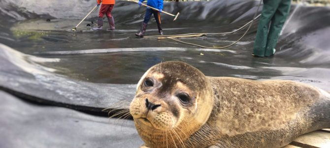 Volunteering at Seal Rescue Ireland