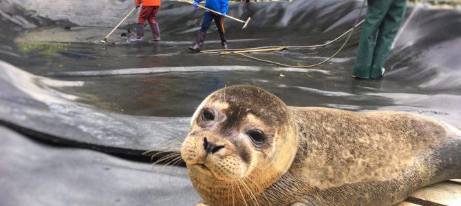 Volunteering at Seal Rescue Ireland