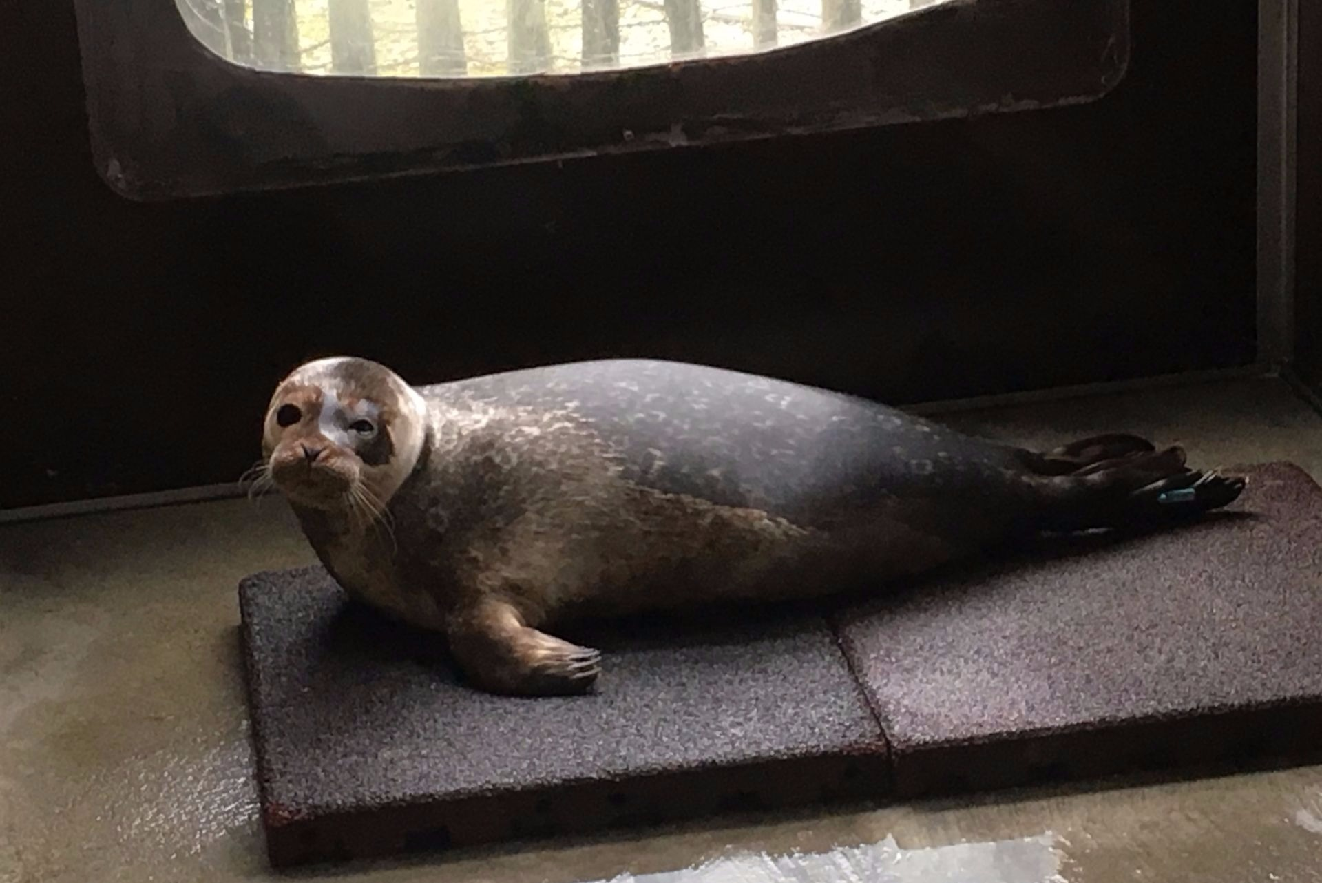 baby seal rescue animal rescue ireland