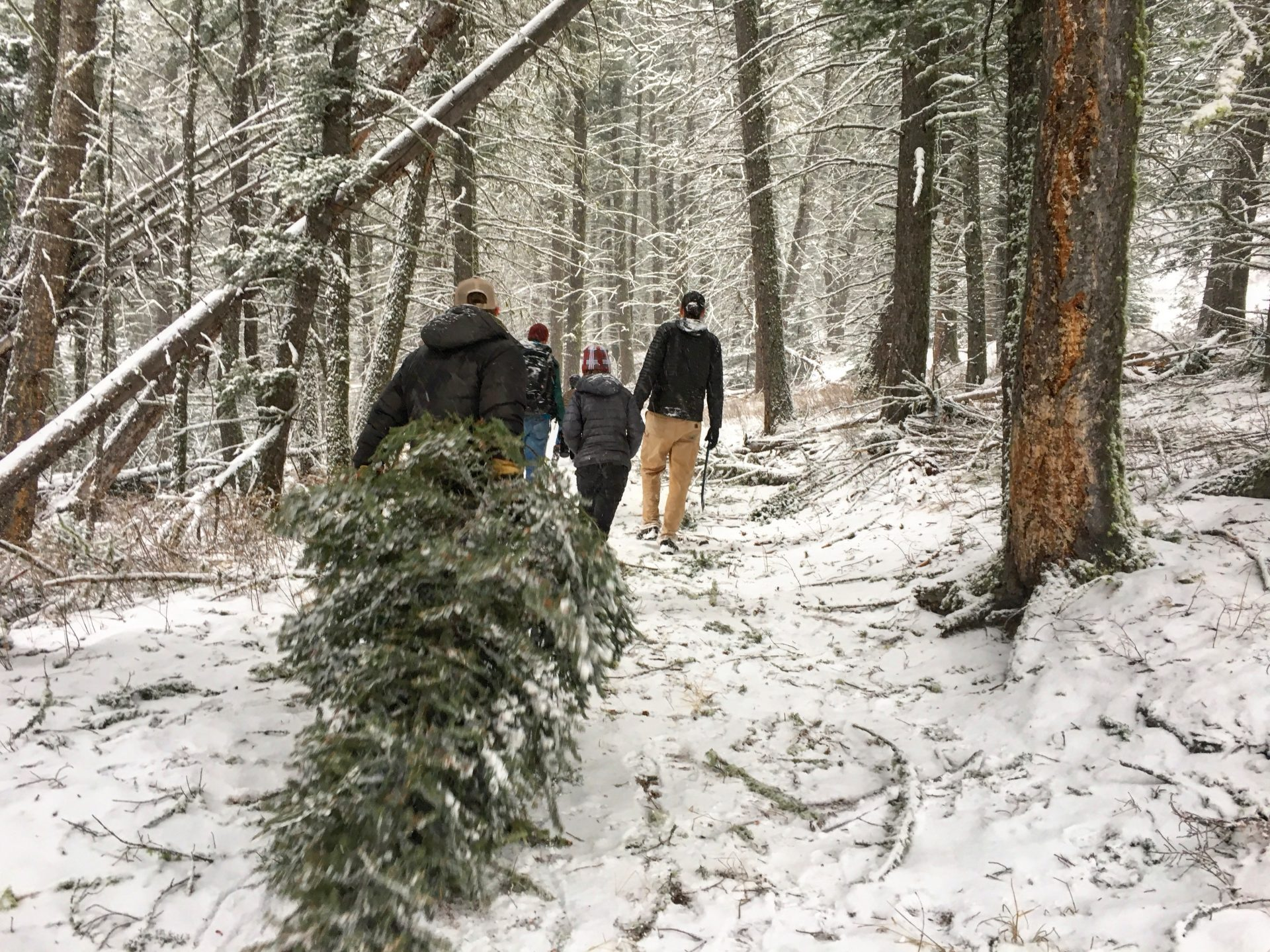 Christmas Tree hunt in the forest