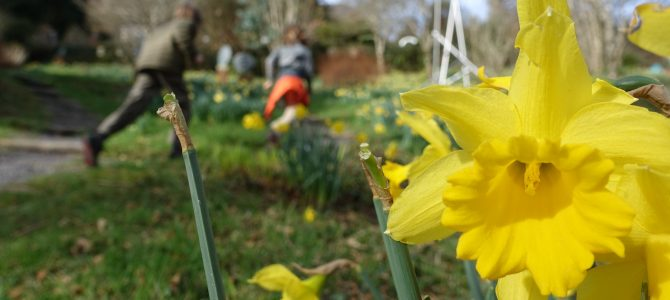 Hamani in the UK or How I Came to Love Spring