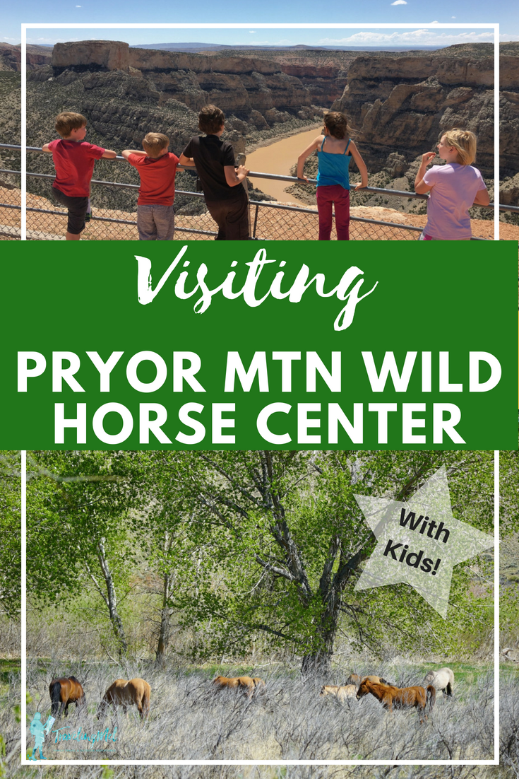 We went looking for wild horses at the Pryor Mountain Wild Mustang Center and Pryor Mountain Wild Horse Range in Montana and Wyoming. Plan your own trip with details on finding wild horses, wild horse visitor center, and other things to do in Bighorn Canyon National Recreation Area.