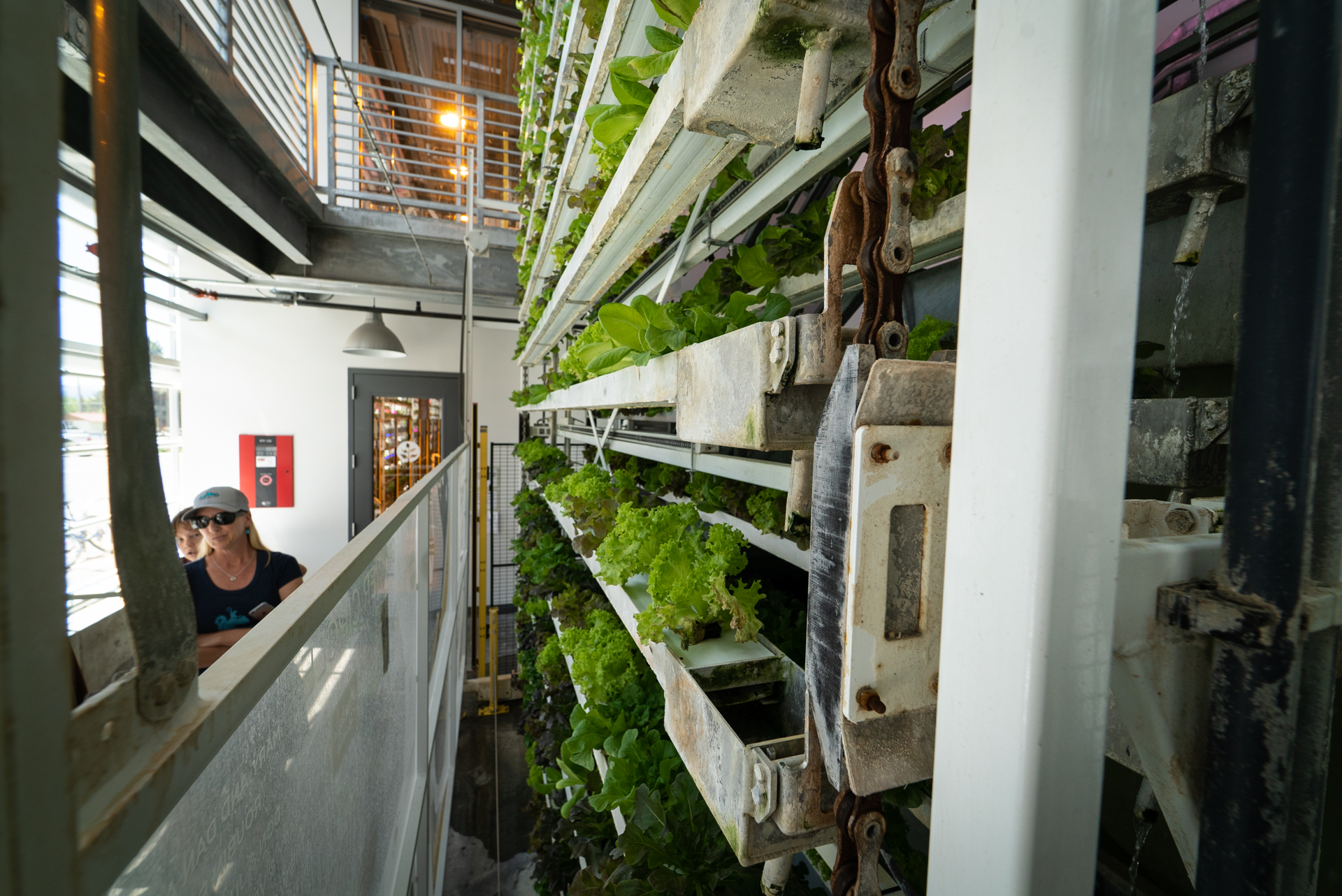 Vertical Harvest hydroponic garden is one of the best things to do in Jackson Hole