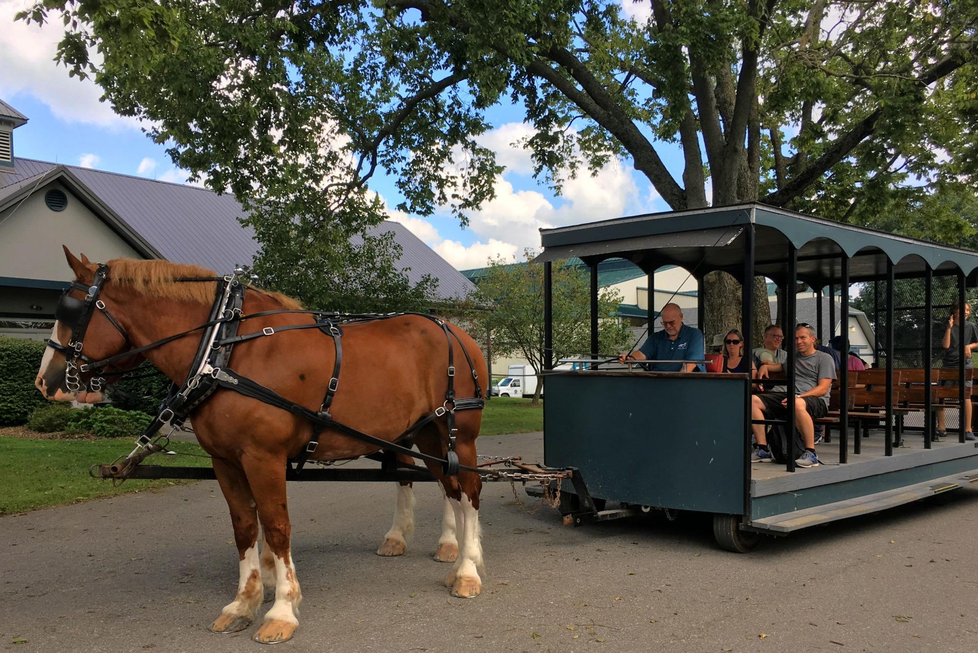 Wagon ride at the Kentucky Horse Park