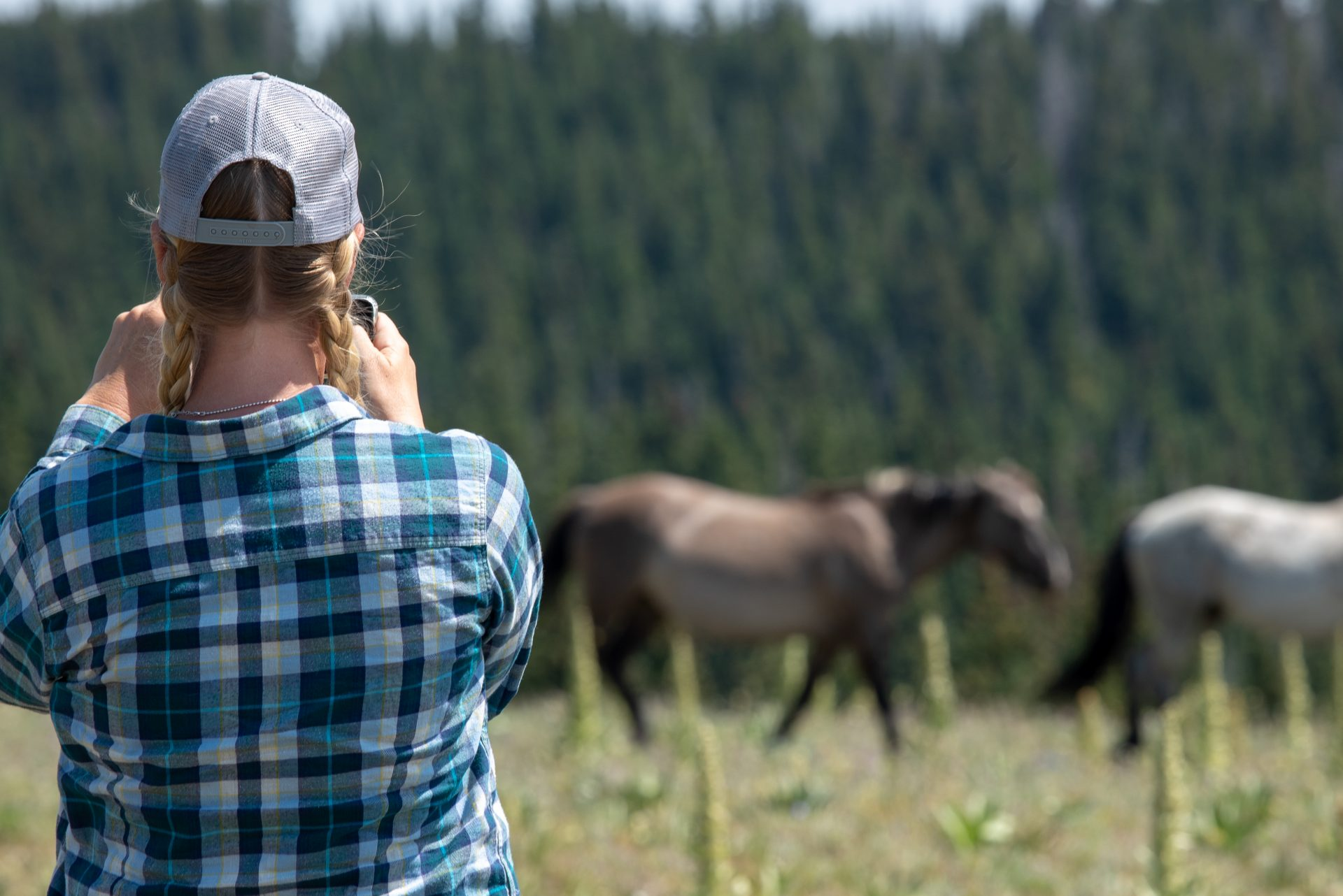 Watching wild horses in Montana
