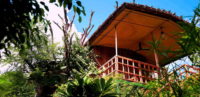 The Tree House Resort, Jaipur, Rajasthan