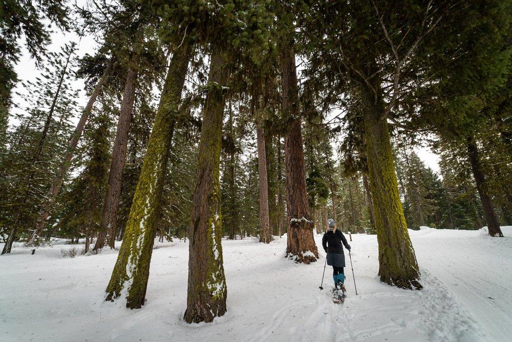 snowshoe ponderosa state park idaho