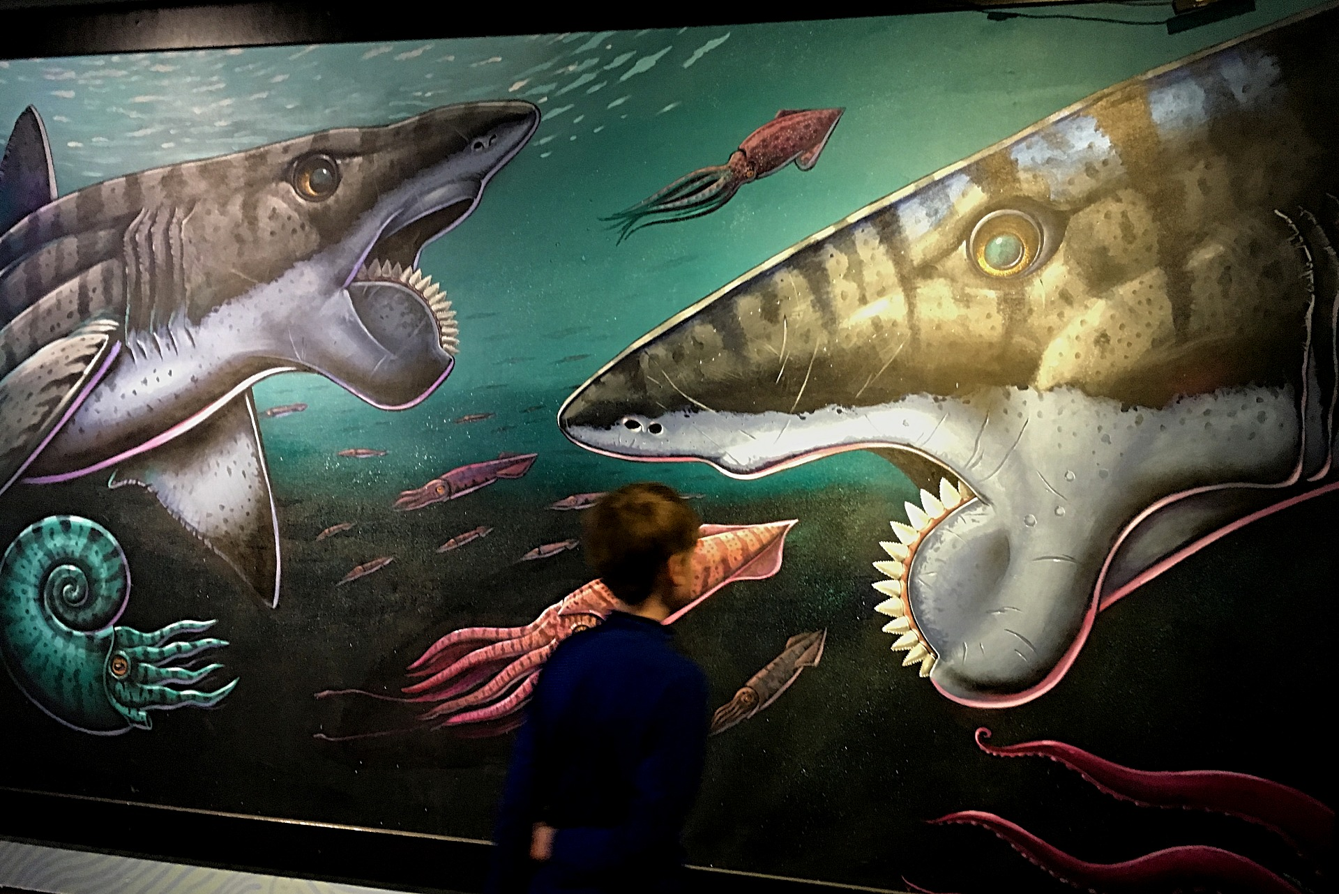 Buzzsaw shark mural at the Idaho Museum of Natural History