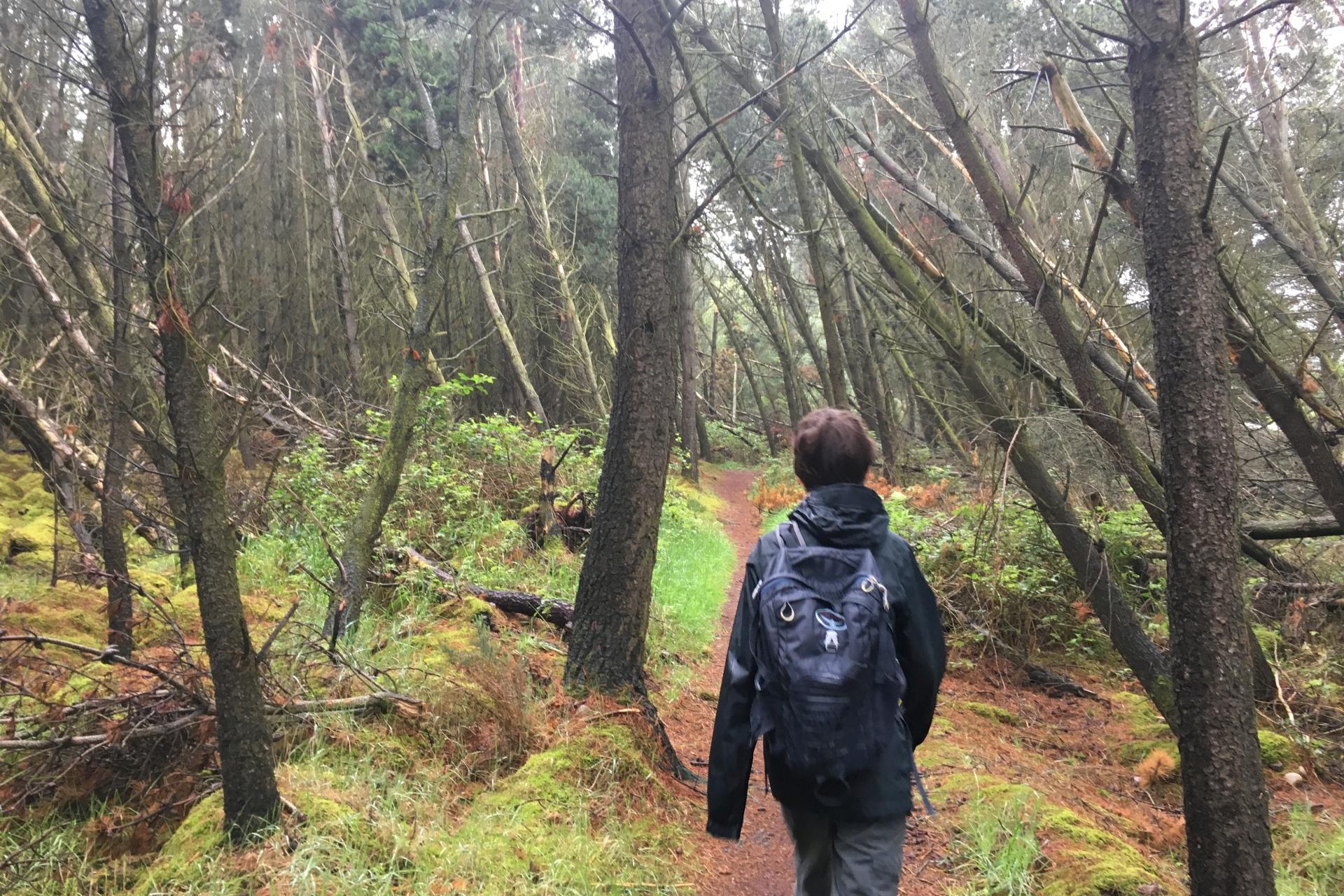 walking through the woods walking in scotland