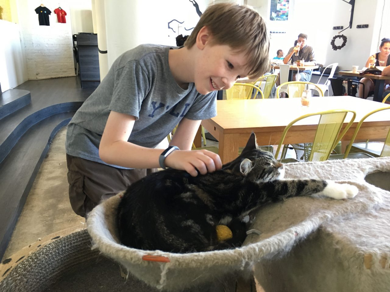 boy petting a cat in a cat cafe in Tallinn Estonia