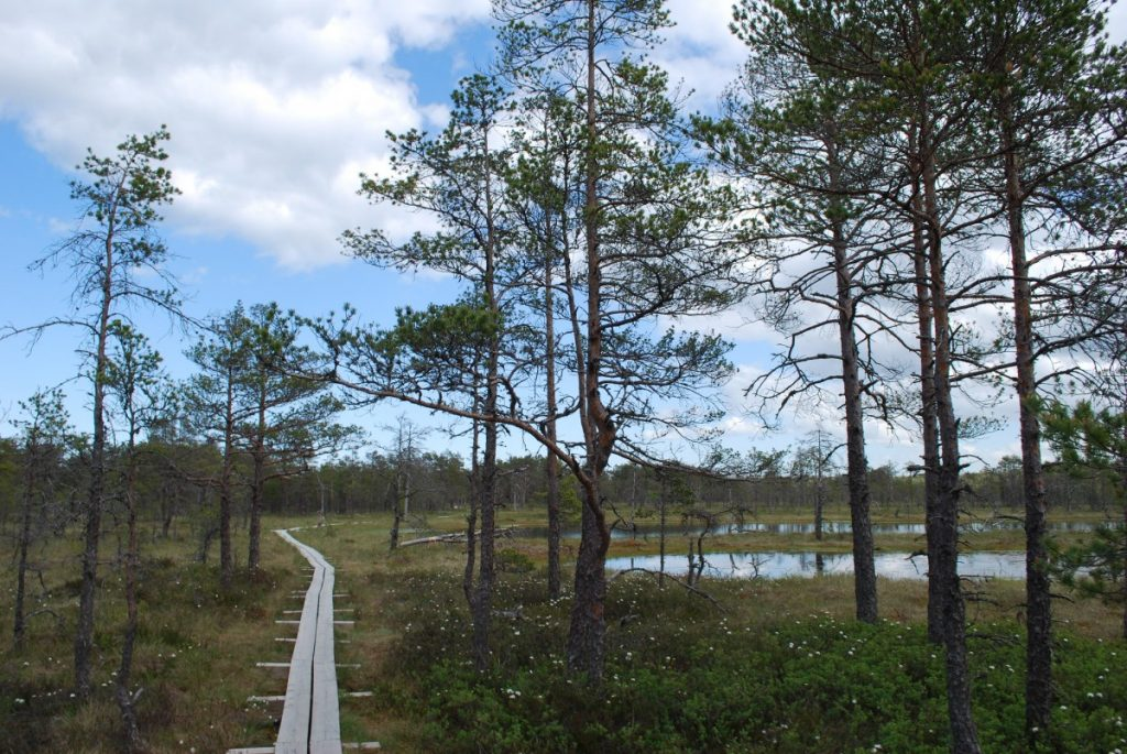 Viru Bog Estonia a day trip from Tallinn