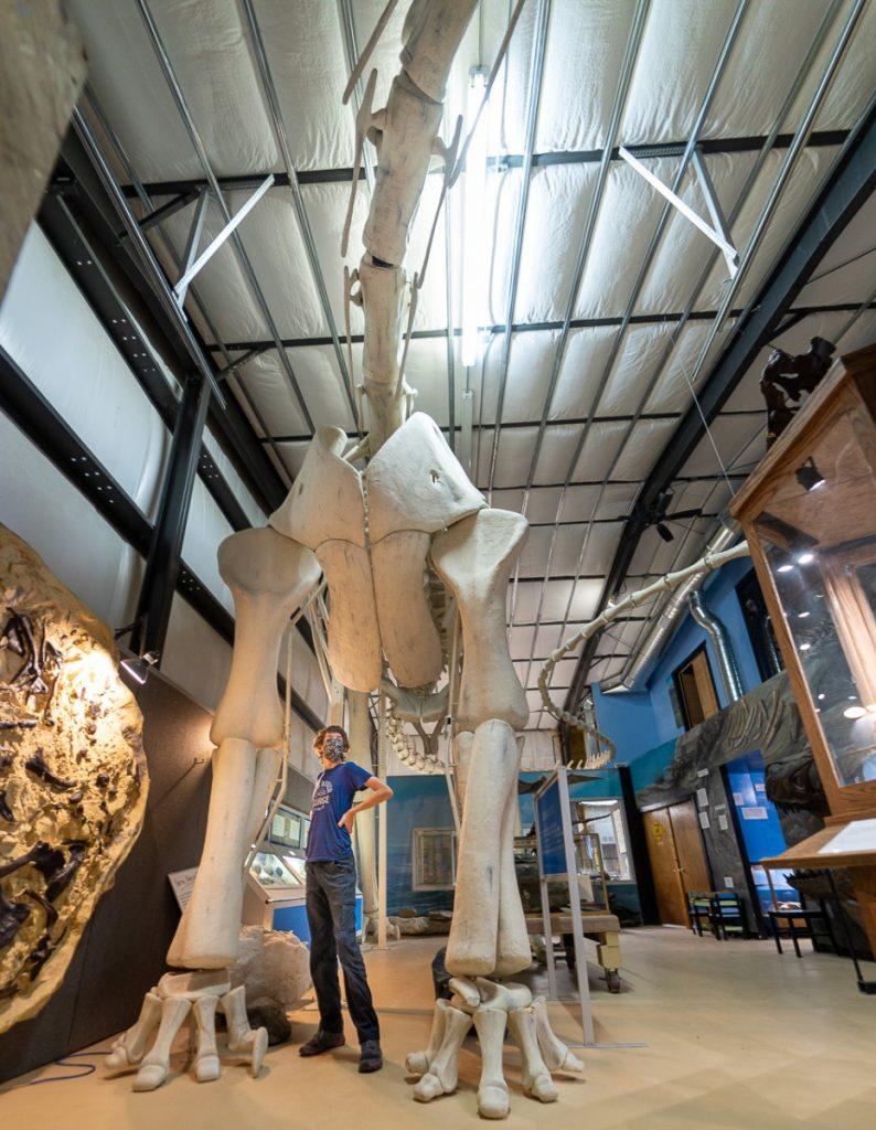 museum on Montana's Dinosaur Trail