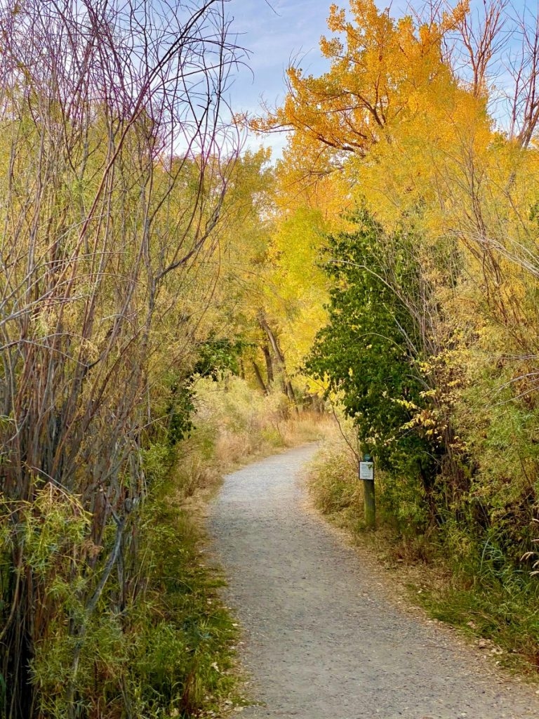 trail through yellow and orange trees fall colors in Billings Montana
