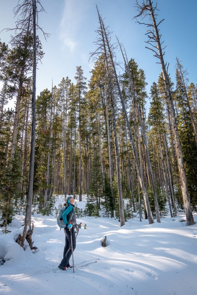 cross country skiing in the forest near Cooke City Montana