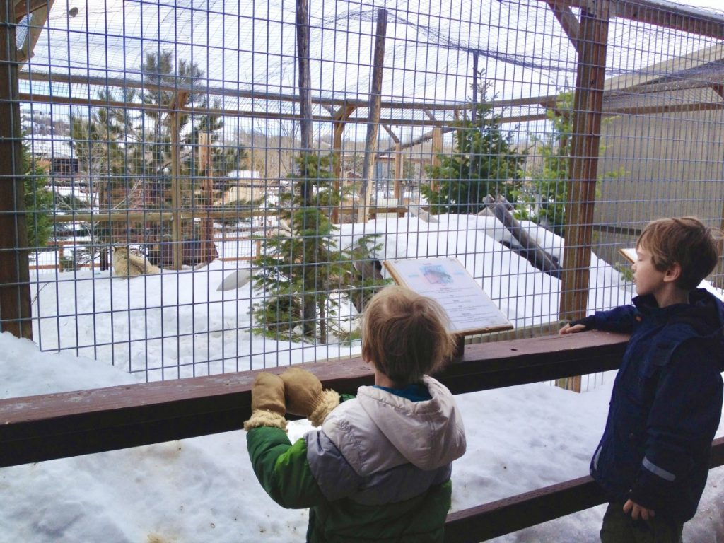 boy looking at animals in the snow