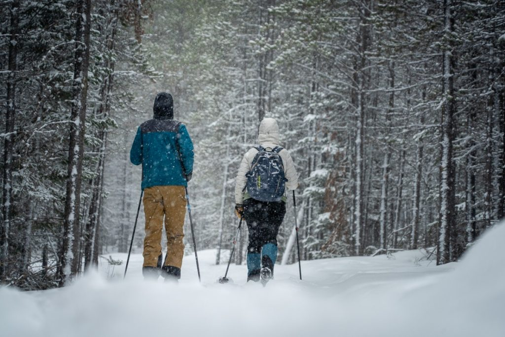 two people cross country skiing between snow covered trees