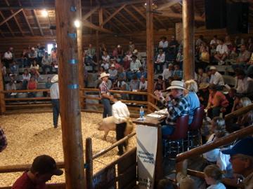 4H Hog Sale at the Park County Fair 2007